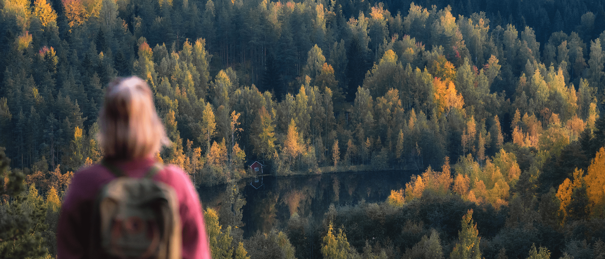 Person watching water and forest