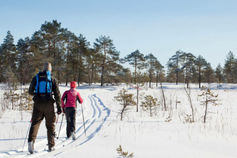Two persons skiing at Leivonmäki National Park