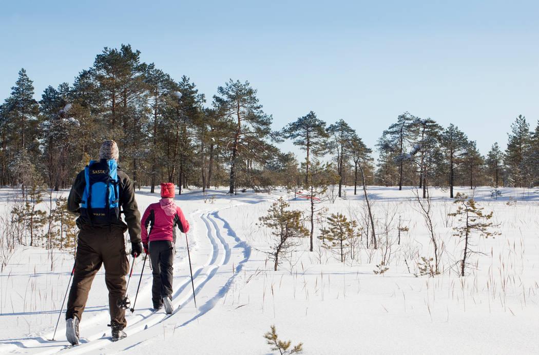 Kaksi henkilöä hiihtää Leivonmäen kansallispuistossa