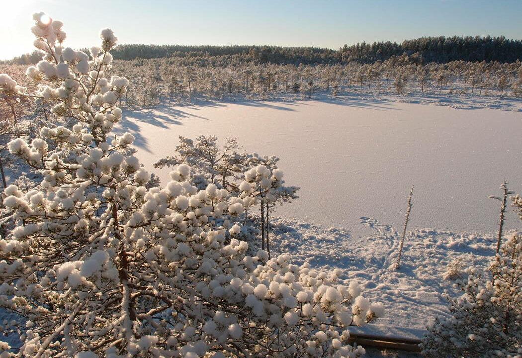 Talvinen maisema Salamajärven kansallispuistossa
