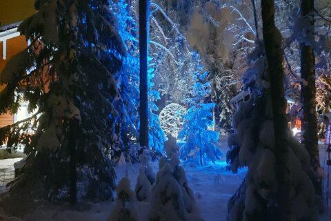 Valoveistos talvisessa metsässä