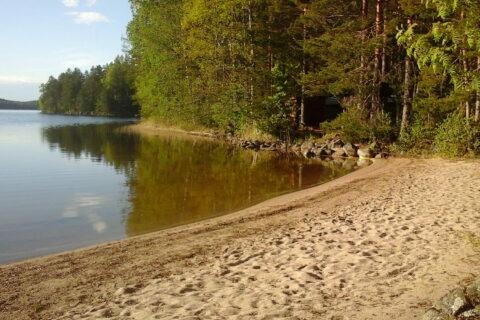 Uimaranta ja metsä