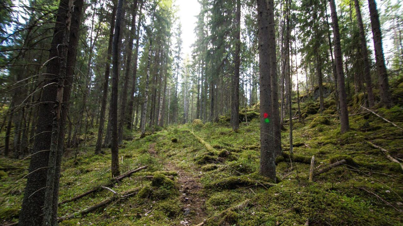 Metsäpolku Himoksella