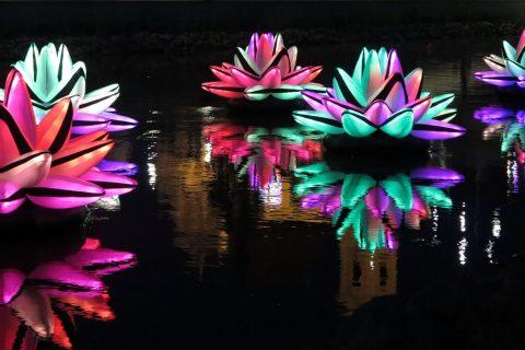 Valotaideteos, jossa viisi suurta, värikästä ilmatäytettyä liljankukkaa kelluu vedessä.